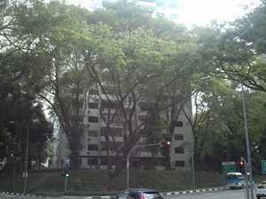 20100204_singapore_027